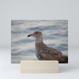 Young Gull in Malibu Mini Art Print
