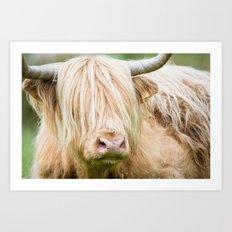Scruffy Cow Art Print