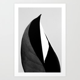 Abstract leaf 4050 Art Print