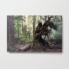 forest decomposition Metal Print