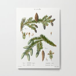 Black spruce, Abies nigra and Silver fir, Abies alba from Traité des Arbres et Arbustes que l'on cul Metal Print