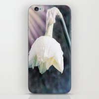 the shining iPhone & iPod Skins featuring Shining Light by Lynn Bolt