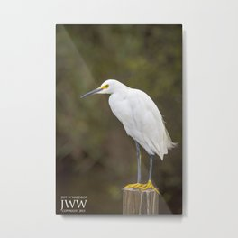 Louisiana Egret Metal Print
