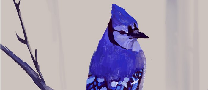 Blue Jay Bird Coffee Mug