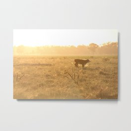 Calf on the Run Metal Print