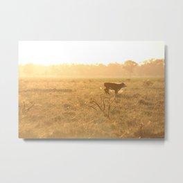 Calf on the Run Metal Print
