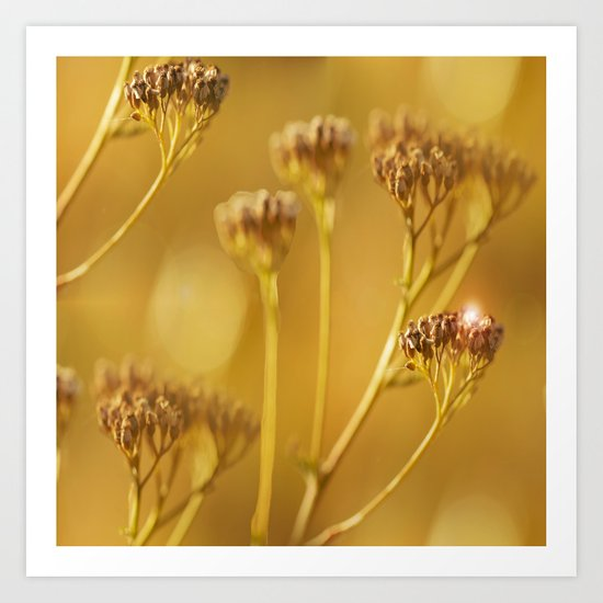 Autumn wildflowers in forest Art Print