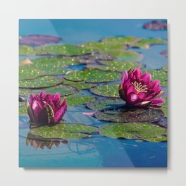 Two water lilies Metal Print