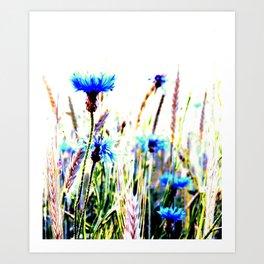 Centaurea flowers Art Print