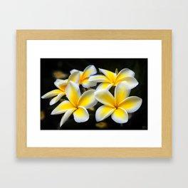 Plumeria Floral Art, Plumeria Iphone Case, Floral Tote Bag, Floral Throw Pillow, Framed Art Print