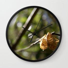 Cicada Shells Wall Clock