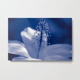 Enchanting Moments - Pua Aloalo - Koki'o Ke'oke'o - Hibiscus Arnottianus - Hawaiian White Hibiscus Metal Print