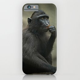 Celebes Crested Macaque Youngster iPhone Case