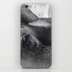 Elephant Eye iPhone & iPod Skin