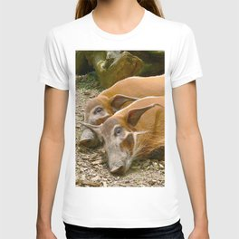 Red River Hogs taking a nap T-shirt