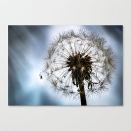 Spider o Canvas Print