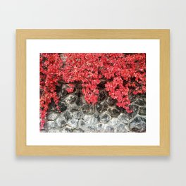 Pink red ivy leaves autumn stone wall Framed Art Print