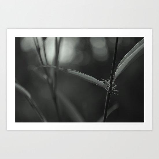 Detalle Art Print
