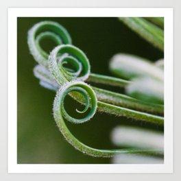 Palm frond spirals closeup Art Print