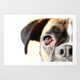 Eye of a boxer dog Art Print