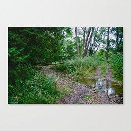 Creek Clearing Canvas Print