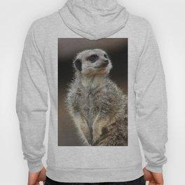 Meerkat Pose Hoody