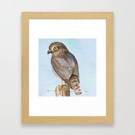 sparrow-hawk Framed Art Print