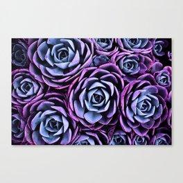 Succulent Garden Pink Purple Periwinkle Canvas Print