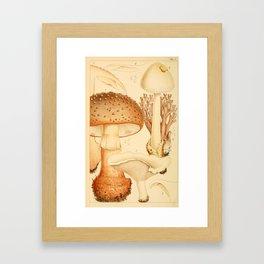 British Edible Fungi Framed Art Print