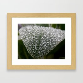 Rainy lambs ear Framed Art Print