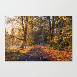 Autumnal alley in sunset light in Oregon Canvas Print