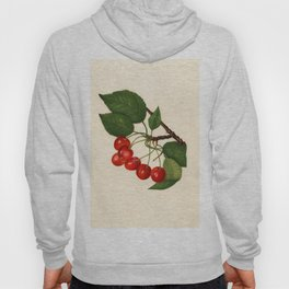 Vintage Illustration of a Cherries Hoody