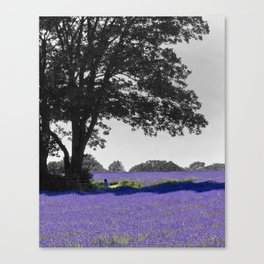 Mayfield Lavender Canvas Print