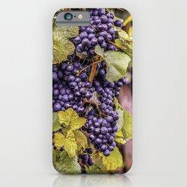 Newport Wine Vineyard and Grapes, Rhode Island iPhone Case
