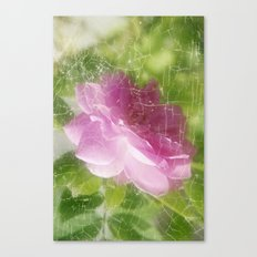 Pinky Rose Canvas Print