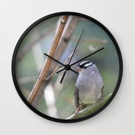 White Crowned Sparrow Wall Clock