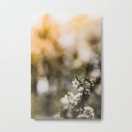 Blooming, Blossom, Sunflare - Spring in my Hearth! Metal Print