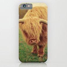 Scottish Highland Steer - regular version iPhone 6s Slim Case
