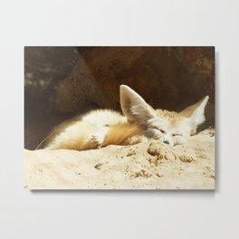 Fennec fox (Vulpes zerda) Metal Print