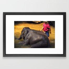 Elephant - Chiang Mai - Thailand Framed Art Print