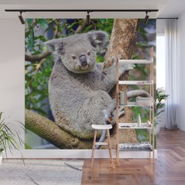 Australian Koala Bear Photo Wall Mural