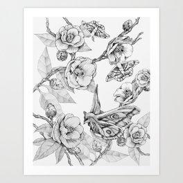 Moths & Camellias Art Print
