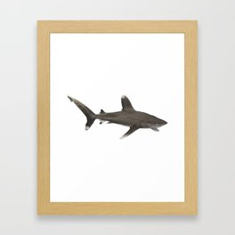 Oceanic Whitetip Shark Aquamarine Marine Life Water Sea Ocean Sharks Family Sea Creatures Gift Framed Art Print