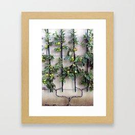 Espallier Framed Art Print
