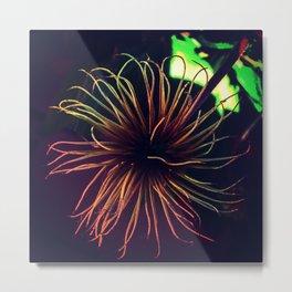 FireCracker Flower  Metal Print