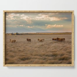 Cows Among the Grass - Cattle Wade Through a Field in Texas Serving Tray
