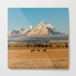 Horses Running in Grand Teton Metal Print