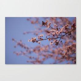 Prunus Canvas Print