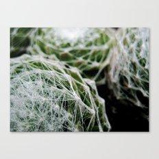 Leslie the Cactus  Canvas Print