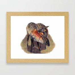 Zebra Duikers Framed Art Print